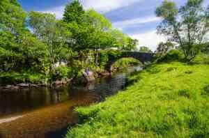 River Aline 016