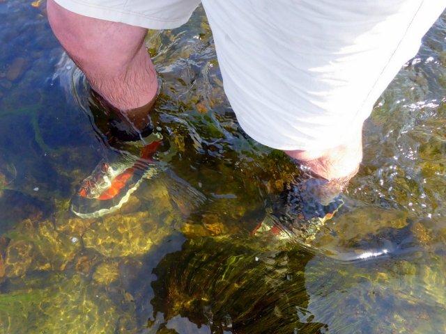 Paul Procter Mackenzie Fly Fishing