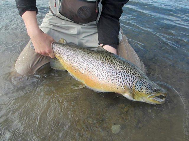 sea-trout-1