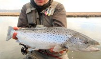sea-trout-2